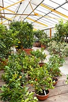 View over potted plants in a Citrus nursery undercover