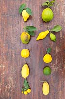 Citrus medica - Citron - collection of different fruits