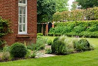 View over narrow border by house with Buxus - Box - balls, Stipa and Sisyrinchium to lawn and border at boundary with trained Photinia, shrubs and ornamental grasses to provide a screen from neighbouring buildings