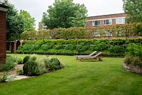 View across lawn with wooden sunloungers, to espalier tree screen the garden from neighbouring property