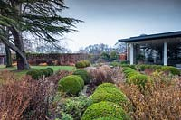 Walled garden with winter borders with buxus topiary balls with view to modern glass garden room