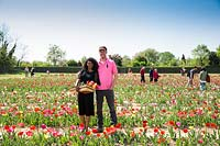 Nursery owners in Tulipa - Tulip - field with visitors