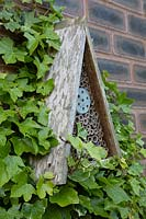 bug hotel attached to brick wall alongside Hedera - Ivy