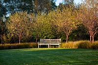 View across lawn to the bench and borders with Prunus serrula var. tibetica - Tibetan cherry and Libertia peregrinans in Autumn.