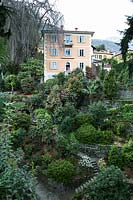 Steep garden of terraces with mature shrubs: Skimmia, Camellia and Rhododendron, view of villa