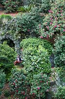 Woman sitting on bench in an old woodland garden of mature Camellia with steep terraces