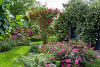 Rosa - Rose - garden with roses in beds and climbing over buildings and gazebos, varieties include: Rosa 'New Dawn', Rosa 'Chevy Chase' and Rosa 'Magic Meidiland'