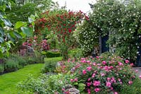 View of a rose garden with window in bed. Planting includes Rosa 'New Dawn', Rosa 'Chevy Chase' and Rosa 'Magic Meidiland'