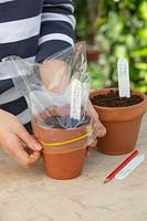 Person putting a plastic bag over a pot to act as a mini glass house.
