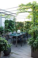 View across decking to a dining area under a metal pergola with climber. Plant screens around the perimeter with Hydrangea 'Limelight', in foreground  Pittosporum tobira 'Nanum', Loropetalum 'Black Pearl' and Agapanthus