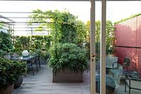 View of roof garden from interior sliding doors, a decked area with dining area under pergola divided from other seating by planter with Edgeworthia, red partition in front of chairs