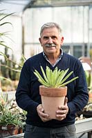 Nurseryman holding potted Agave in a greenhouse