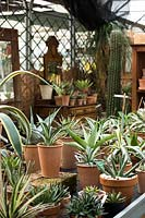 View across bench display of Agave in terracotta pots