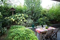 Shrub border around sunken paved dining area, shrubs: Indigofera, Hydrangea and Camellia