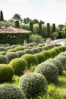 Mixed topiary spheres.  The garden focuses on perfumed evergreens - pitosfori, olive trees, oleanders and lonicera nitida.