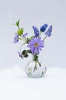 Still life - spring flowers - Muscari - Vinca major - Anemone blanda Common dog violet - in small glass vase