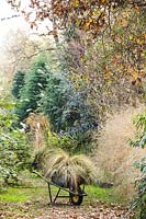 Along the avenues of the nursery Cunnunghamia, Eucalyptus, Betula, Panicum, and Rubus with grasses in a wheelbarrow
