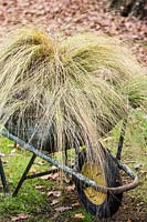A wheelbarrow filled with mixed grasses