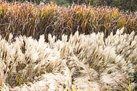 Autumnal grasses at Central Park Nurseries, Italy.