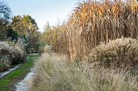 Eragrostis and Miscanthus sinensis 'Adagio' at Central Park Nurseries, Italy.
