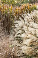 Ornamental autumnal grasses at Central park Nurseries. Italy