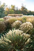 Ornamental grasses at Central Park Nurseries, Italy.