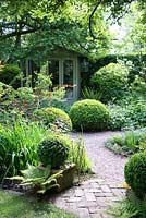 Shaded small town garden with Buxus - Box - topiary, mixed beds, gravel path and summerhouse