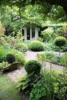 Shaded small town garden with Buxus - Box - topiary, gravel paths, mixed beds and a summerhouse