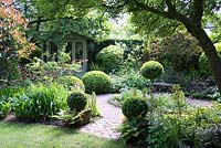 Shaded small town garden with Buxus - Box - topiary, gravel paths, mixed beds and summerhouse