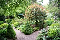 Shaded small town garden with mixed beds with Buxus - Box - topiary near gravel path