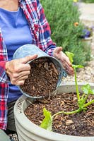 Woman adding layer of wood chippings to act as a mulch to a vegetable planter