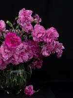 Vase of Dianthus - scented pinks
