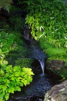 Martens spike moss, and Filmy Maidenhair fern, growing next to a natrualistic looking waterfall.