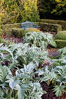 Cynara cardunculus 'Florist Cardy' and Heuchera villosa 'Palace Purple' in The Vegetable garden.