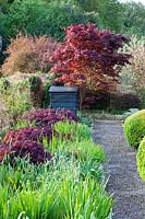 Border with Acer palmatum var.dissectum 'Inaba-Shidare' growing through foliage of Allium and Crocosmia. in The Vegetable Garden.