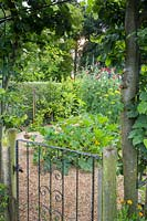 Gateway in to the kitchen garden with trained Malus domestica 'Norfolk Beefing' - Apple - trees, flanking the entrance and a juvenile Erithacus rubecula - Robin - perched on the gate. Gate has chickenwire over it as a barrier to rabbits.