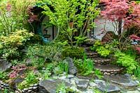 Japanese garden with steps leading up to house and surrounding planting of Acers, Pines and Mosses. RHS Chelsea Flower Show.