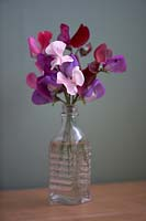 Sweet Pea 'Elegant Ladies' in small glass bottle.