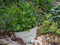Use old containers to plant a wild flower garden. - Place in corner of garden.  Wild radish - Raphanus raphanistrum Wild Tansy  Phacelia tanacetifolia mallow - marigold.