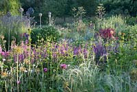 Early light on herbaceous summer border