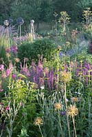 Early light on herbaceous border