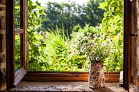 Jug with oxeye daisies and wild carrots on window sill- July