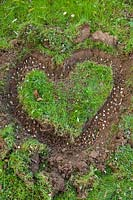 Step by step How to plant a snowdrop heart - Bulbs planted in heart shape