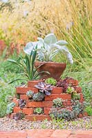 Overview of finished succulent tower topped with Senecio Angel Wings