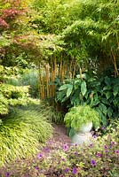 Pot of Acacia cognata 'Fettuccine' surrounded by lush foliage of acers, bamboos, hedychiums, Hakonechloa macra 'Albostriata' and geraniums