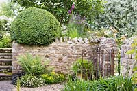 Courtyard garden with clipped box above stone wall next to gate, June