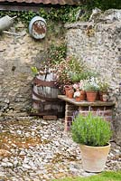Cobbled farmyard with pot of lavender, table with display of succulents, vintage barrel colonised by Erigeron karvinskianus and galvanised gardenalia