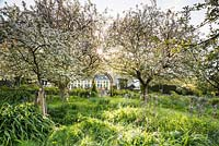 Orchard of fruit trees underplanted with long grasses and blue camassias