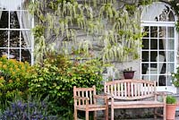 White wisteria climbing the facade of house with roses, Euphorbia mellifera and rosemary surrounding a bench and seat in front.