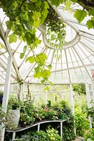 Inside the rare Mackenzie and Moncur glasshouse in the walled garden at Glassmount